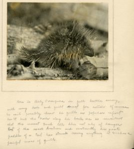 Outing porcupine photo 3